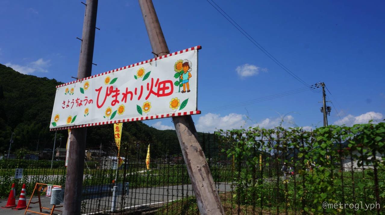 Sayo sunflower festival  12  14